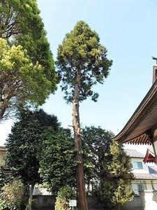 朝倉飯玉神社 (10)