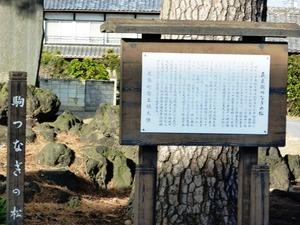 新田義貞 駒つなぎの松 (2)