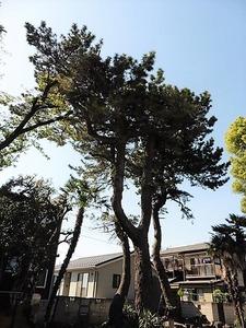 朝倉飯玉神社 (11)