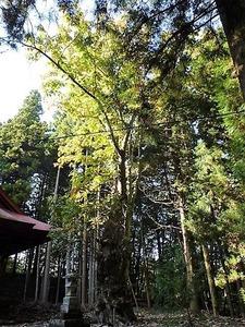 吉岡神社 (16)