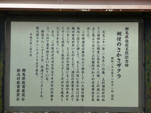 謙信のさかさ桜 (1)