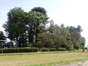 今井神社古墳 (1)