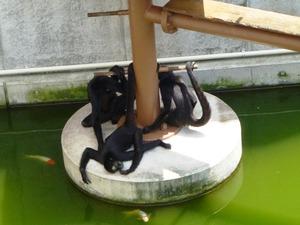 桐生が丘動物園 (8)