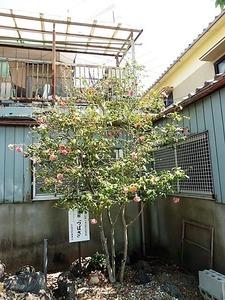 箱田菅原神社 (6)