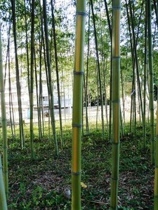 上の森八幡宮 (6)