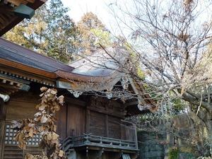 渋川八幡宮 (3)