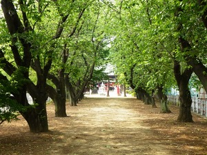 大国神社 (2)