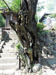 角谷戸薬師堂 (4)