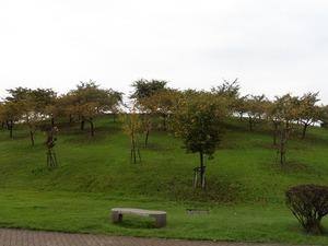いせさき市民のもり公園 (6)