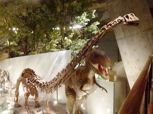 県立自然史博物館 (5)