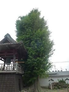 浄泉寺 (4)