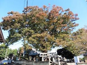 中村早尾神社 (6)