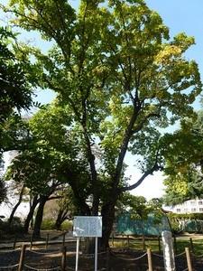高崎公園 (4)