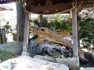 渋川八幡宮 (4)