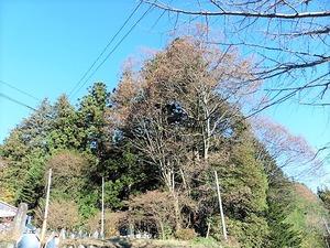萩生浅間神社 (8)