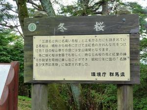 桜山公園 (3)