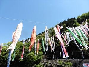 神流町 鯉のぼり (5)
