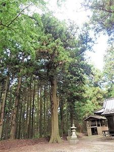 中山神社 (12)