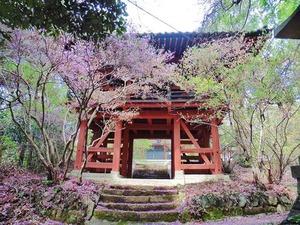 高山・薬師堂 (3)