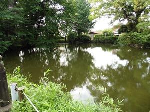 蓮池と渡月橋 (3)