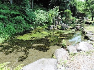 中郷菅原神社 (4)
