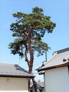 川曲諏訪神社 (9)