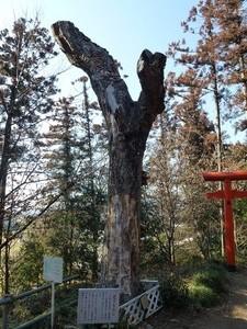 烏子稲荷神社 (5)