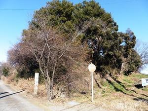 無量寿寺 (5)