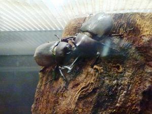 群馬昆虫の森 (4)