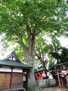 春日神社 (4)