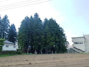 うつぶしの森 (5)