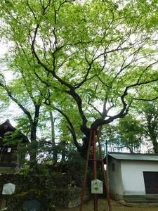 安中・熊野神社 (7)