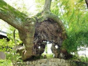 安中・熊野神社 (8)