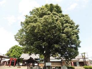 小泉神社 (10)