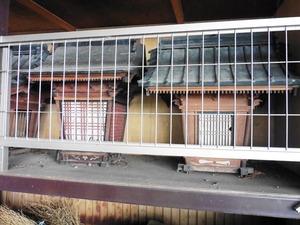 勝山神社 (8)