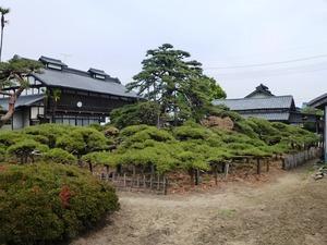 萩原の大笠松 (3)