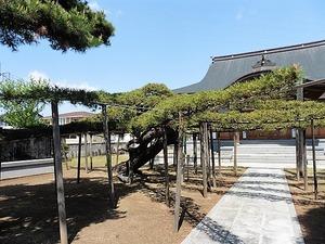 福徳寺 (4)