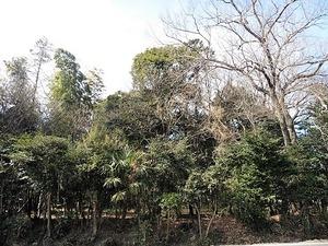 細谷館跡 (2)