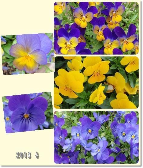 我が家の花118