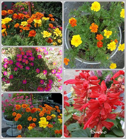 夏の花2  17 8