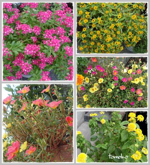 夏の花 17 8