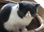 お友達の家の猫ちゃん