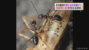 名古屋港で ヒアリ以上のクソヤバイ蟻が発見される