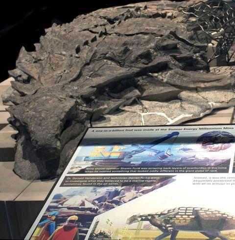 まるで彫刻!恐竜の完全な姿をとどめた化石がクソかっこいい!!