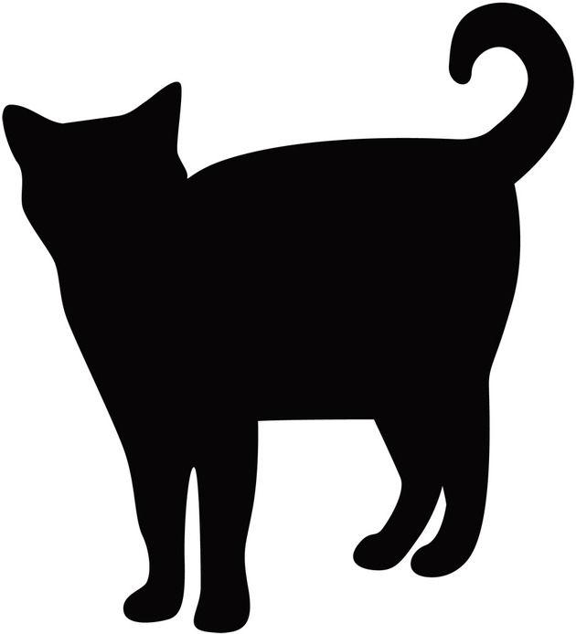 【画像】このネコが「拾ってくれニャー」って鳴いてたらどうする?www