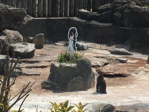 ペンギンが恋する姿を初めてみた
