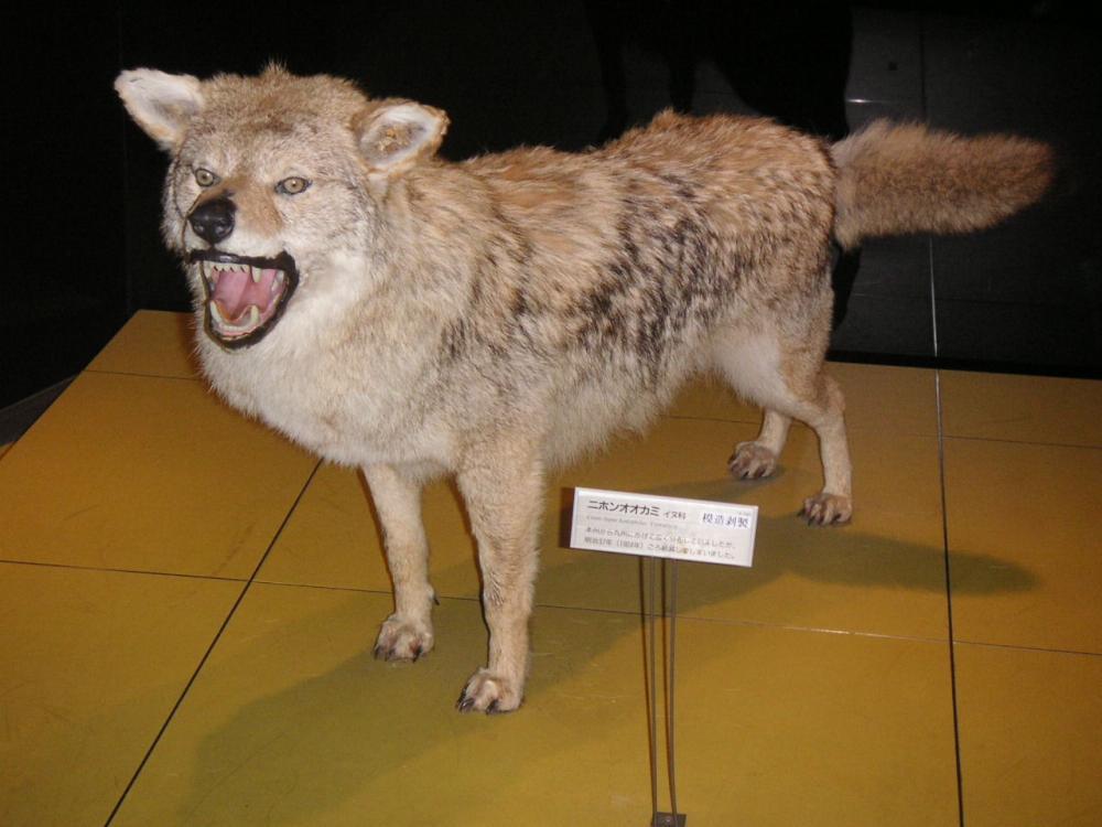 【悲報】これが世界で唯一絶滅を望まれている生物wwwww
