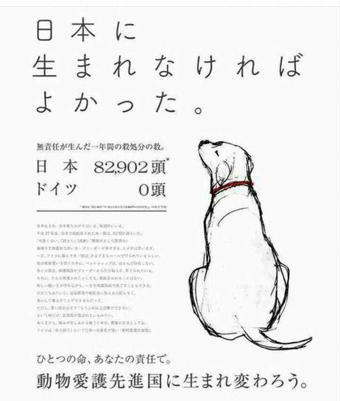 【画像】犬「日本に生まれなければ良かった」 動物愛護者が作った広告が物議