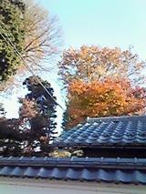 日野の紅葉