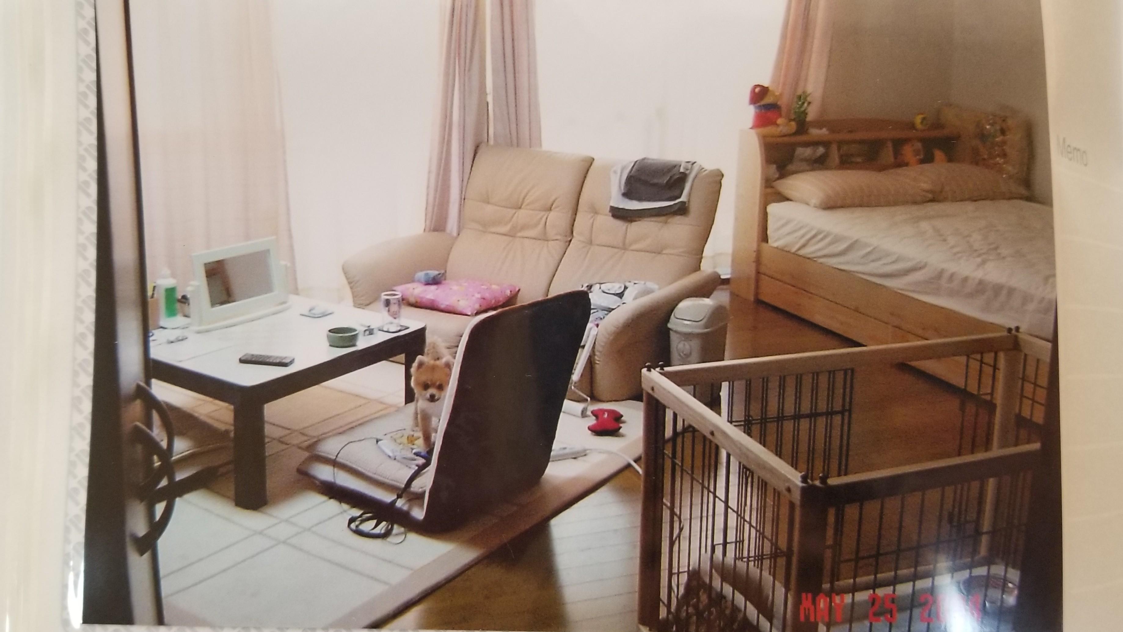 愛犬好きペットを探して一人暮らし女子部屋ワンルームソファーベッド
